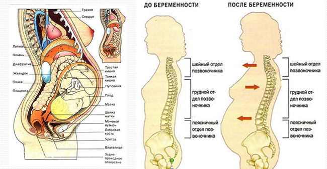 Что происходит с организмом во время беременности