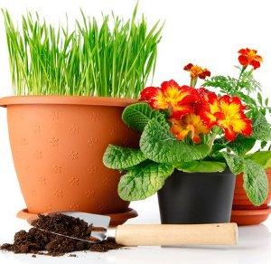 Советы любителям комнатных растений